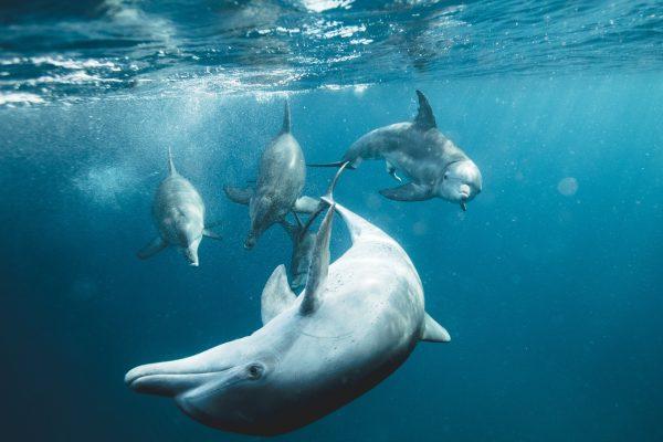 Por que a água é tão importante para os seres vivos?